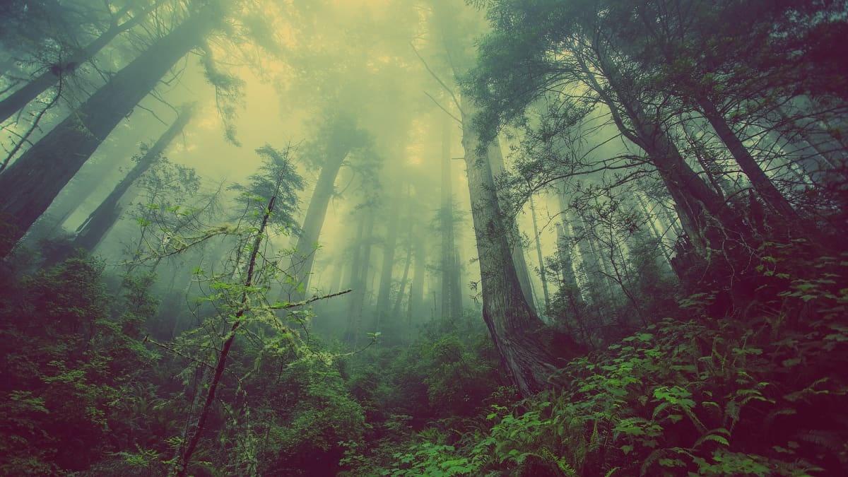 Travera - V souladu s přírodou